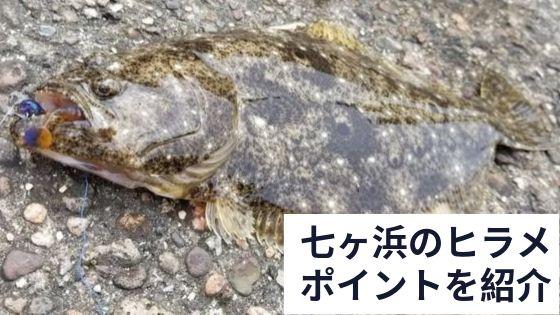 七ヶ浜のヒラメ ポイントを紹介