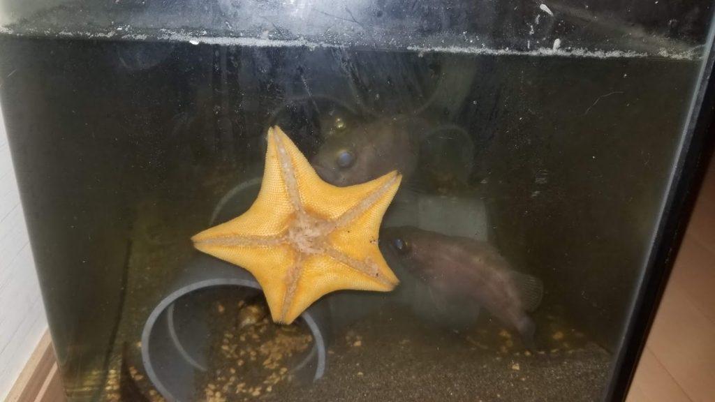 海道河童で飼育した海の生物2