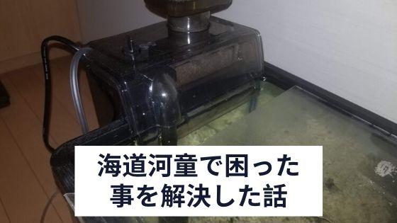 海道河童本体の写真