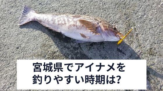 宮城県でアイナメを釣りやすい時期は?