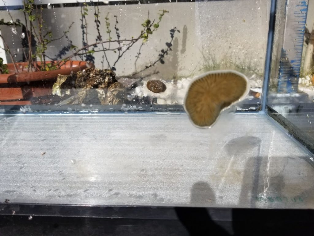 イソギンチャクが水がなくても生きている写真
