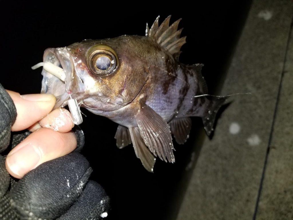 メバルを釣る時のおすすめのワーム