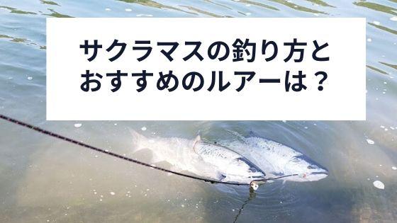 サクラマスの釣り方