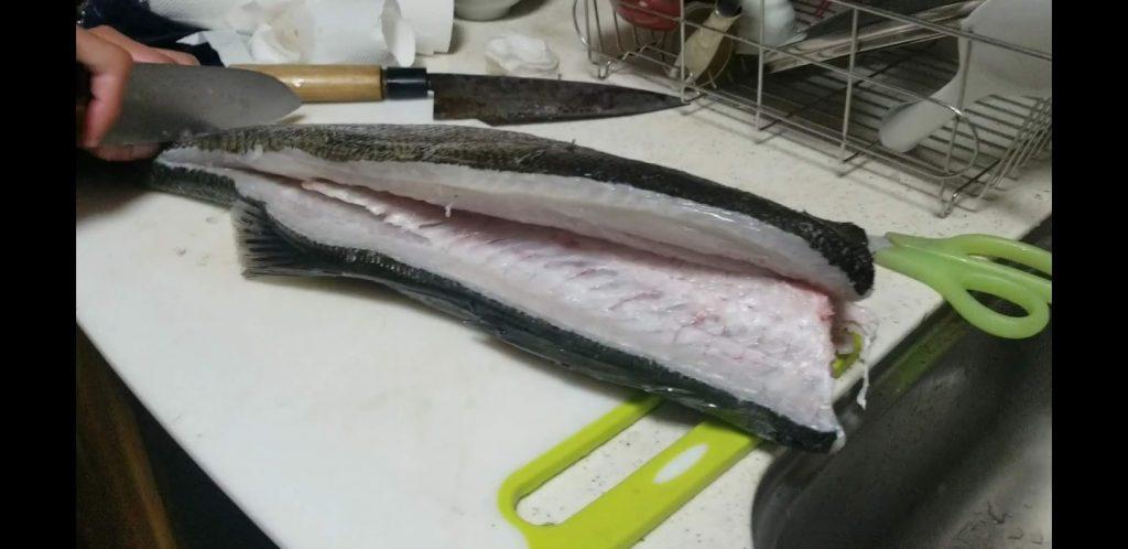 シーバスを刺身で食べる切り方⑮