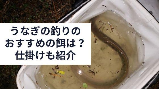 うなぎ釣りの餌とおススメの仕掛けの紹介