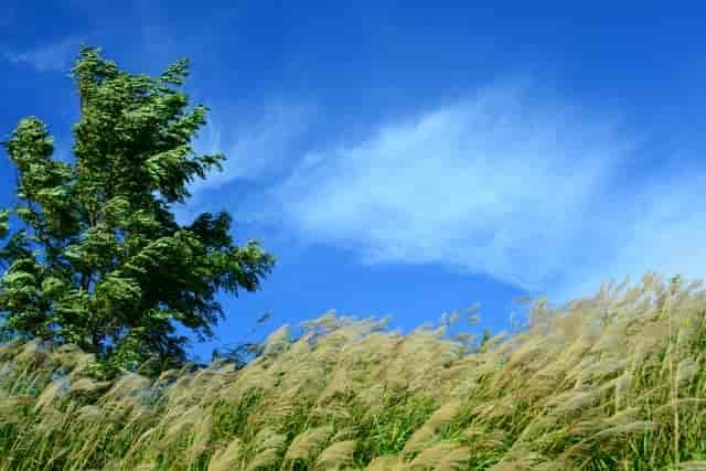 風が強い写真